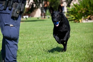 Police K9 Instructor Course