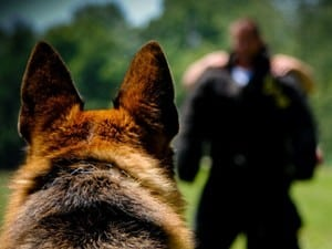 Police K9 sales and training
