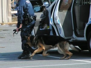police patrol dog