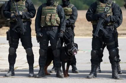 Military k9 training