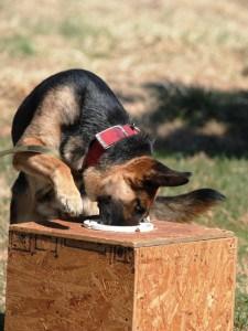 GSD Drug Dog Donation