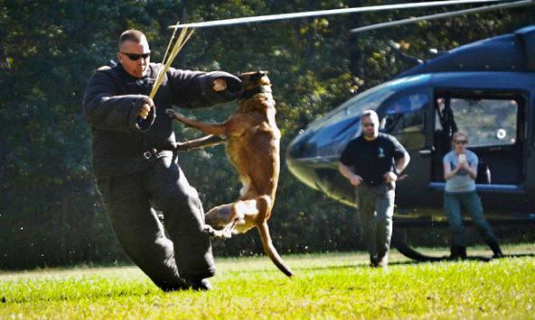 police dog certification