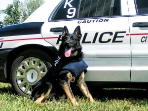 police patrol dog training