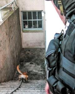 police aptrol dog building search