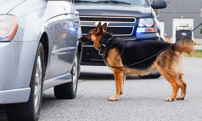 Canine training seminars