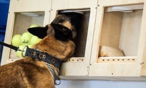 detection dog trainer certification