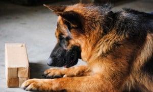 detection dog trainer school