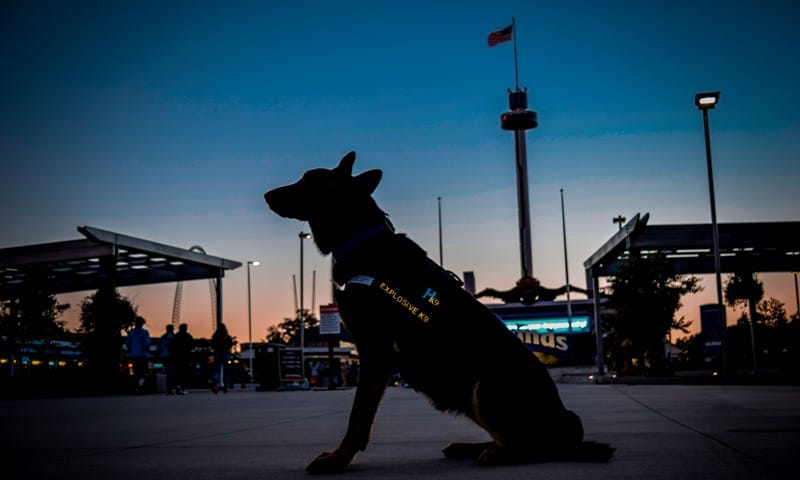 explosives detection dog security