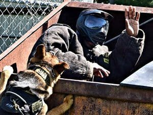 police k9 training courses