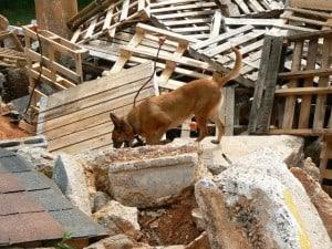 disaster dog