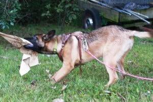 Police K9 Puppy