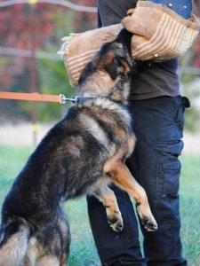 police dog for sale