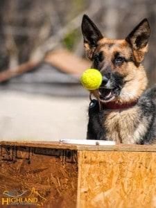 GSD Police Dog Donation