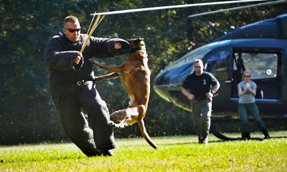 police dog certification