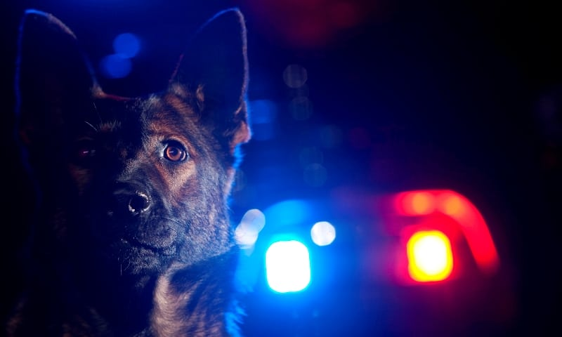 police k9 consulting