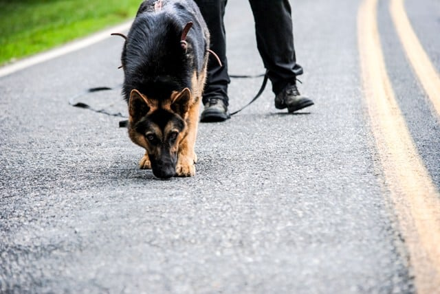 how to become a dog handler for the police