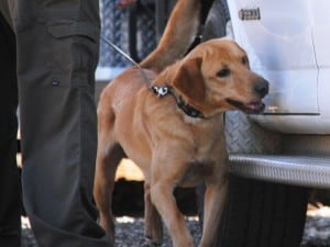 bomb detection dog