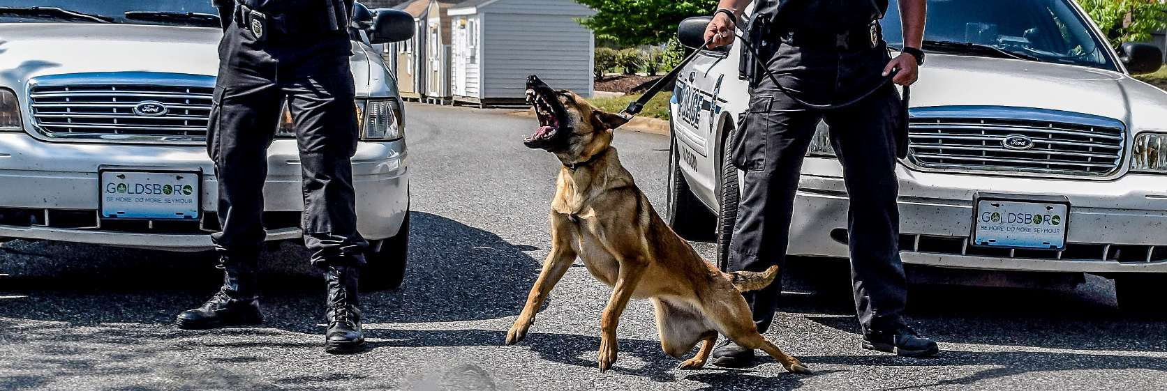 police k9 handler training