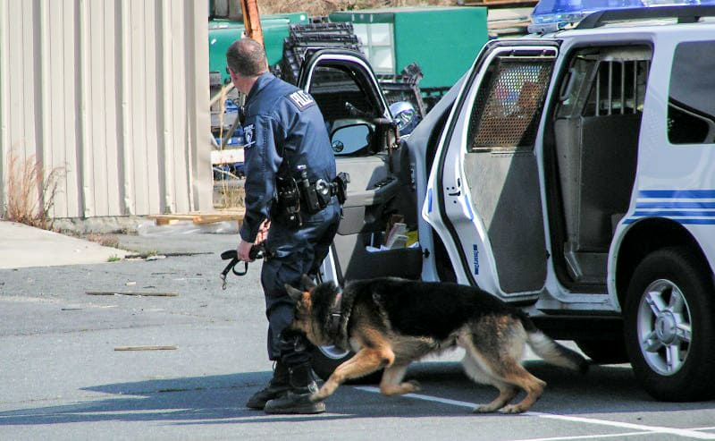 K9 reteam training courses