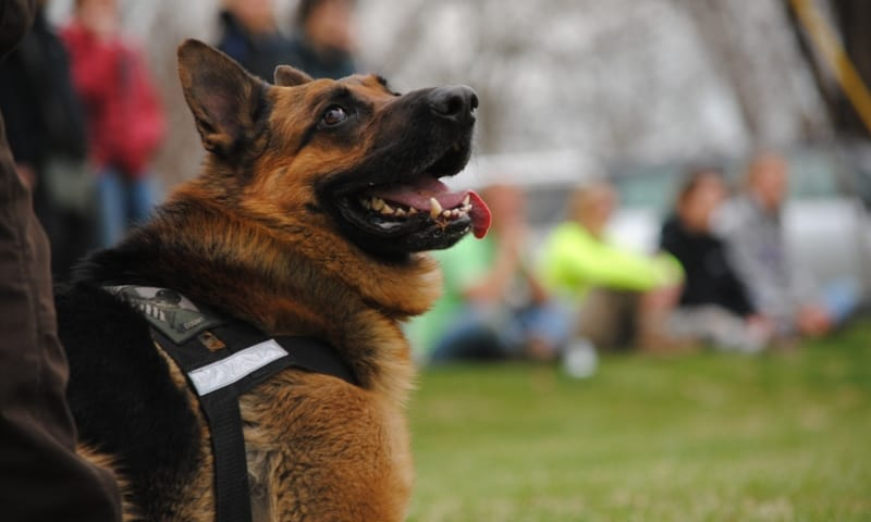 police k9 handler training course