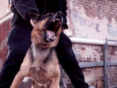 Police Patrol K9 Problem Solving Seminar