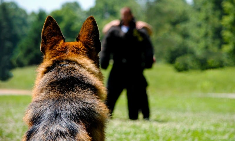 police dog trainer certification