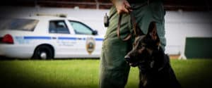 Here's Why Your Police Department Should Never Buy a 'Green' Dog
