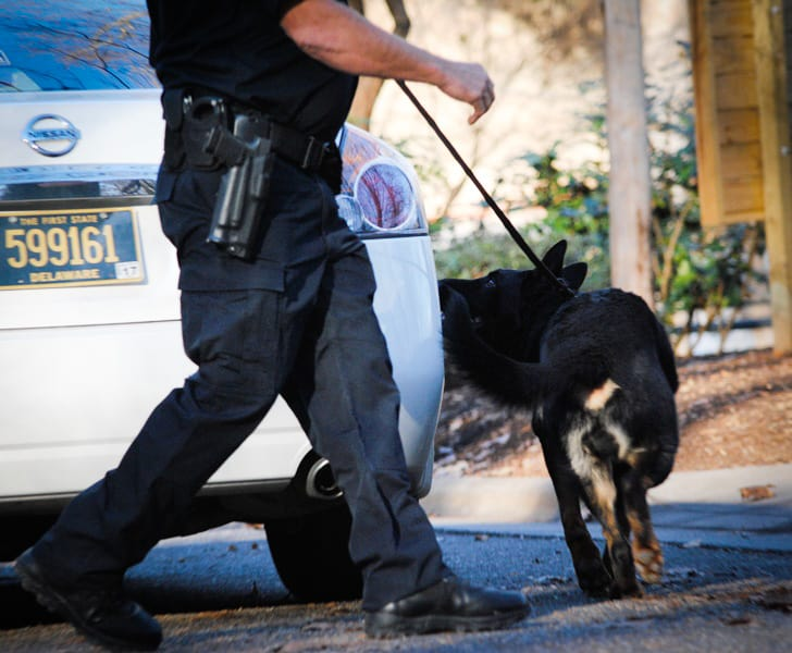 scenario-based police k9 training for detection dogs