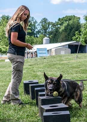 shana parsnow manager working dog