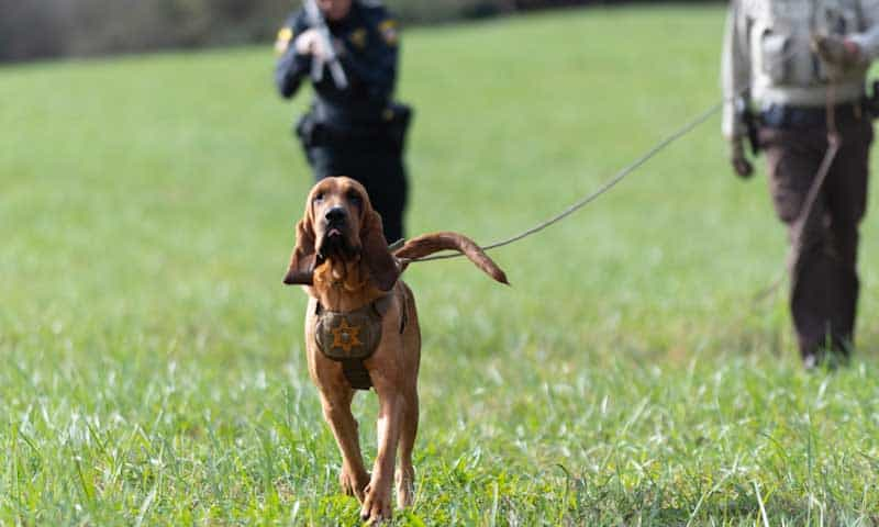 tactical k9 trailing seminar