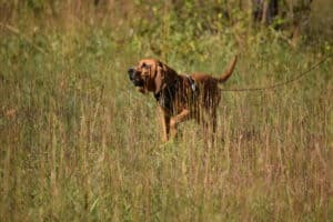Four Great Options For Finding New Track Layers For Your K9