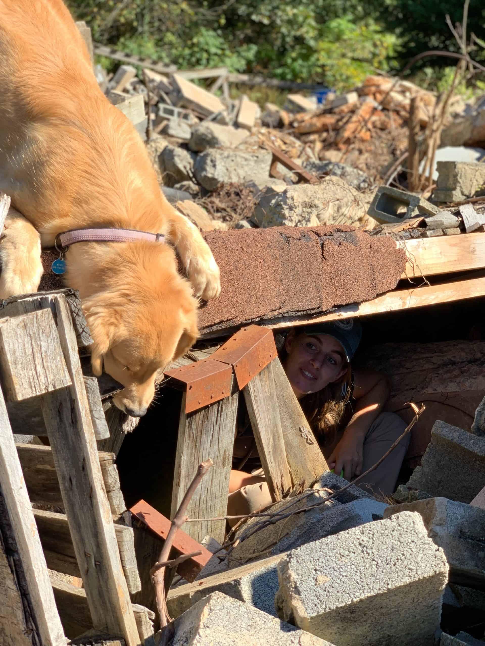 disaster sar dog