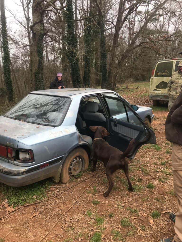 cadaver dog searching car