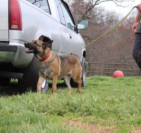 How Do Detection Dogs Find Drugs?