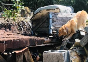 How Do Search And Rescue Dogs Locate Victims Of Disasters?